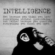 intellignence question all everything you know chimp monkey